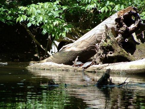 Link to Foto Gallery of Wild Life in Opequon Creek